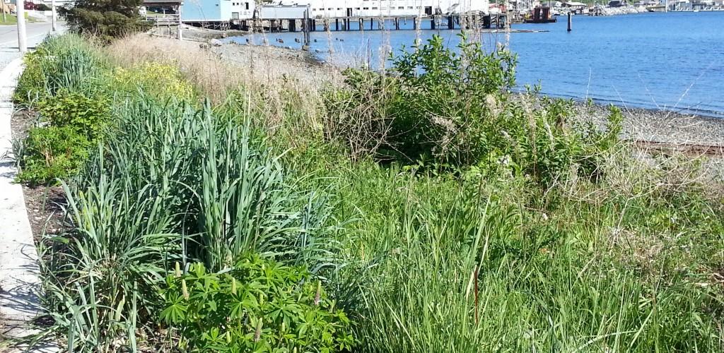 Alert Bay Shoreline Reclamation