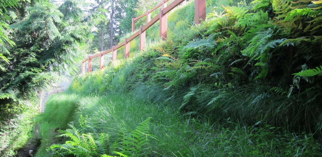 Ferns and grasses are planted in shadier areas.