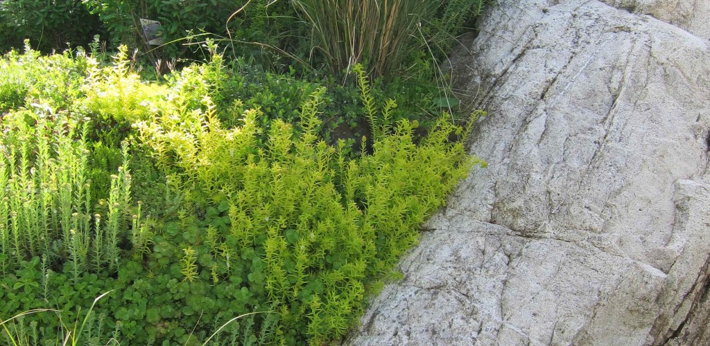 Native plants integrated with in situ rock
